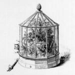 caisses de Ward (petites serres portatives en terre cuite)