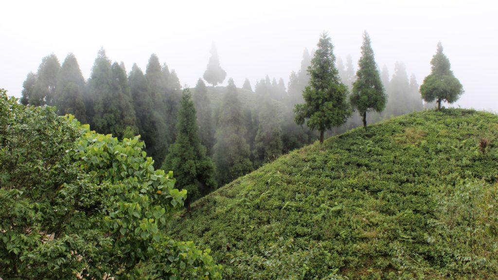 NEPAL_ Gorkha_Plantation_Sundarpani_Ilam