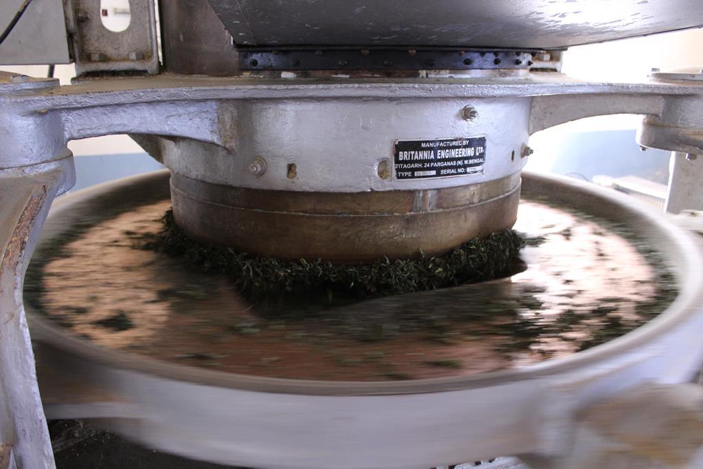 Divinithe roulage des feuilles de thé - Illam Nepal