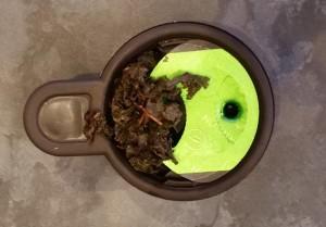 Capsule de thé Assam de la T.O by Lipton après infusion